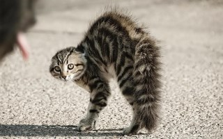 https://thelittersitter.files.wordpress.com/2014/03/angry-cat.jpg
